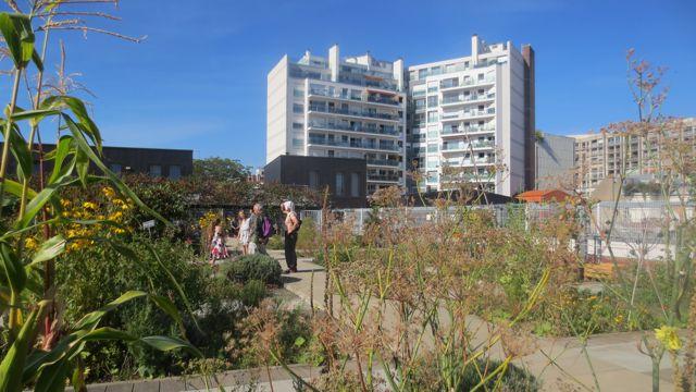 jardin toit3