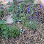Vegetalisationparis1 1024x576