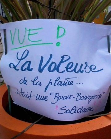 Vol à Saint Blaise : recherche belle plante désespérément…